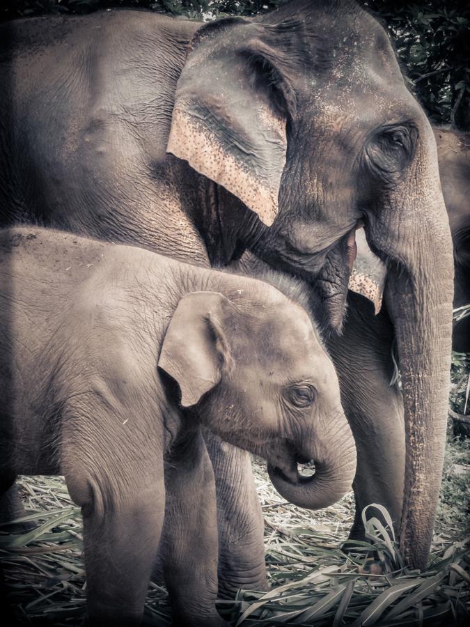 elephants-16