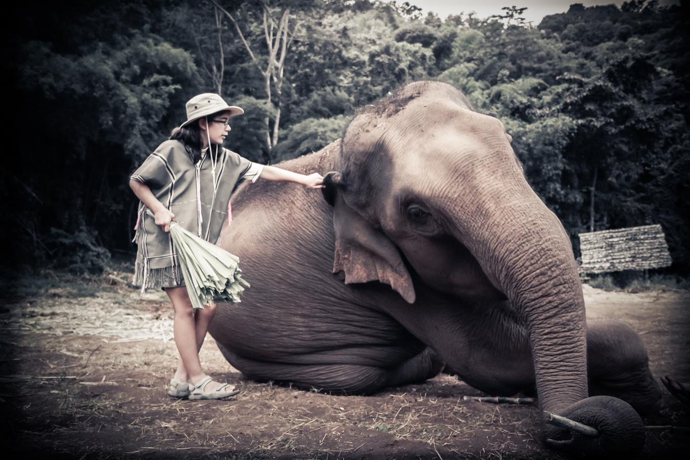 elephants-24