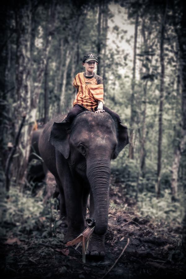 elephants-32