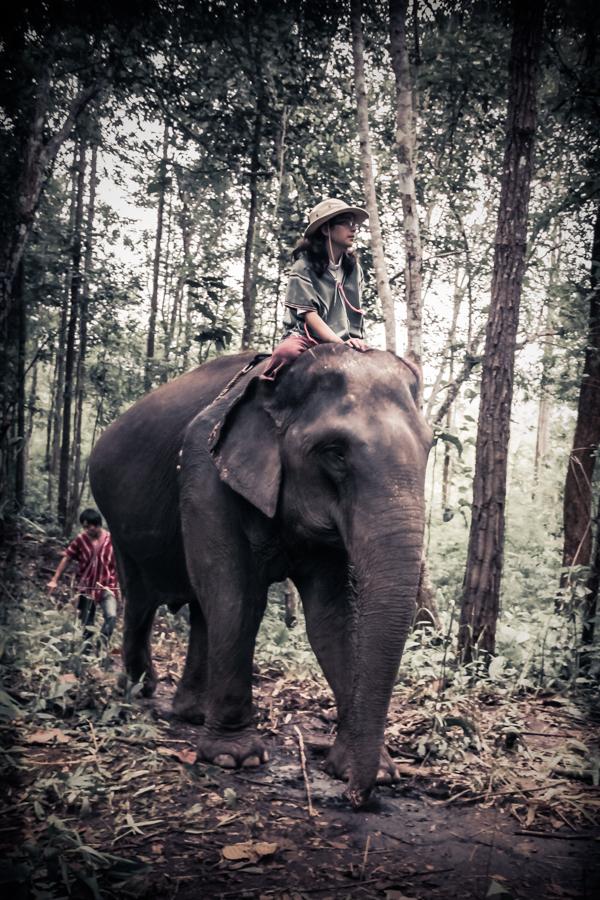 elephants-33